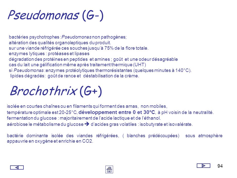 Pseudomonas (G-) Brochothrix (G+)