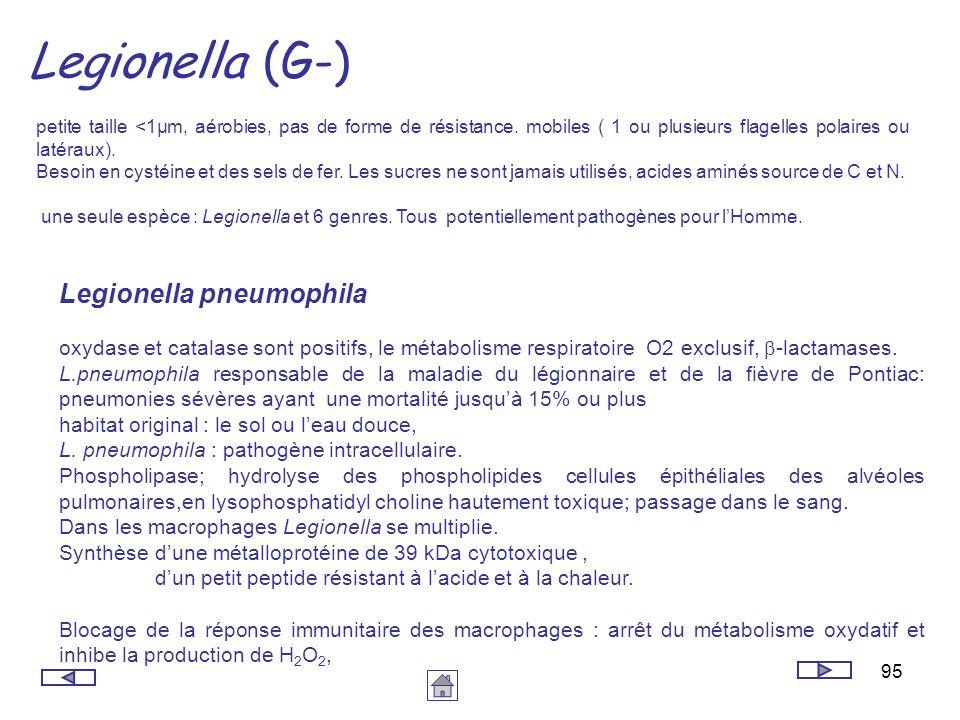 Legionella (G-) Legionella pneumophila