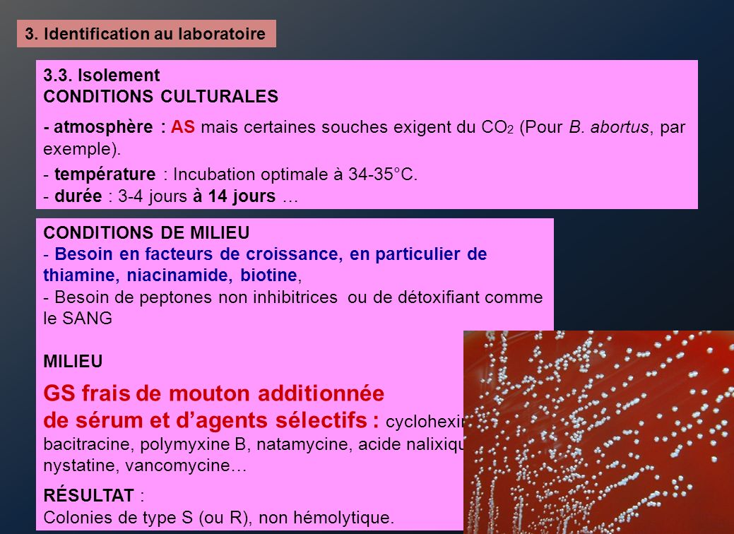 3. Identification au laboratoire