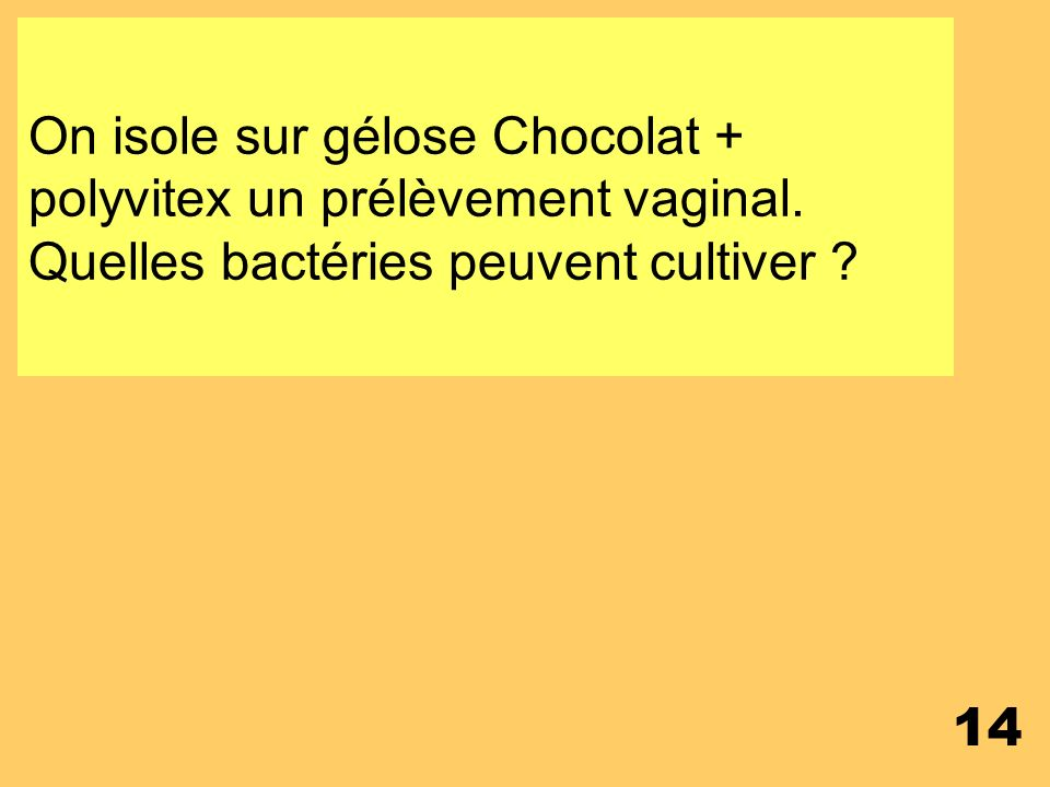 On isole sur gélose Chocolat + polyvitex un prélèvement vaginal