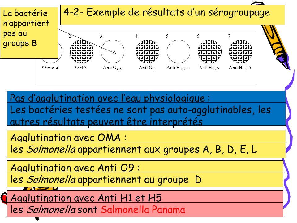 4-2- Exemple de résultats d'un sérogroupage