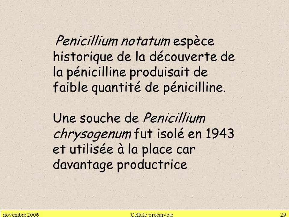 Penicillium notatum espèce historique de la découverte de la pénicilline produisait de faible quantité de pénicilline.