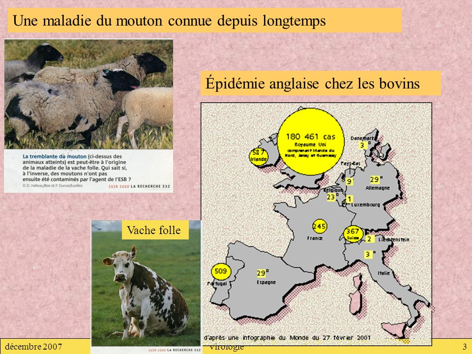 Une maladie du mouton connue depuis longtemps