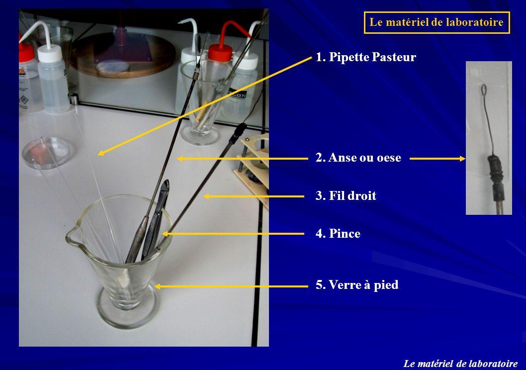 1. Pipette Pasteur 2. Anse ou oese 3. Fil droit 4. Pince