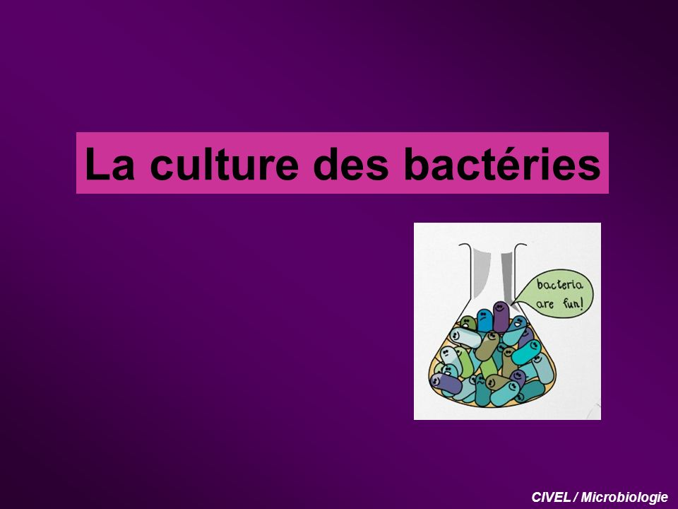 La culture des bactéries