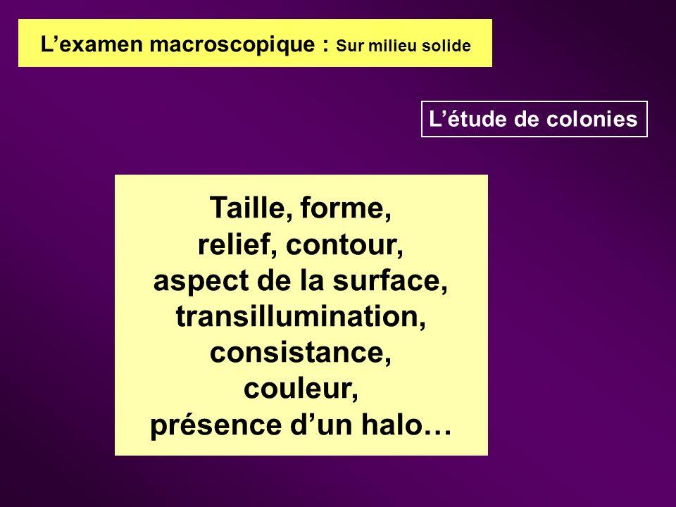 aspect de la surface, transillumination, consistance,