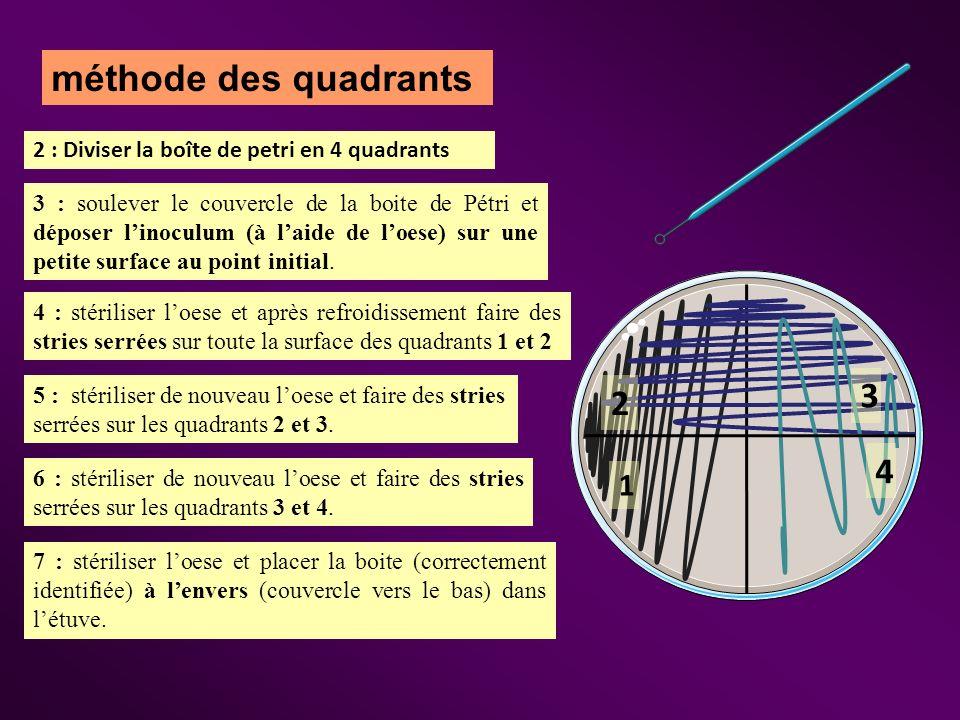 méthode des quadrants 2 : Diviser la boîte de petri en 4 quadrants.