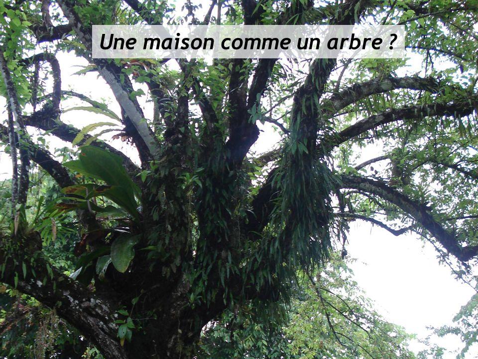 Une maison comme un arbre