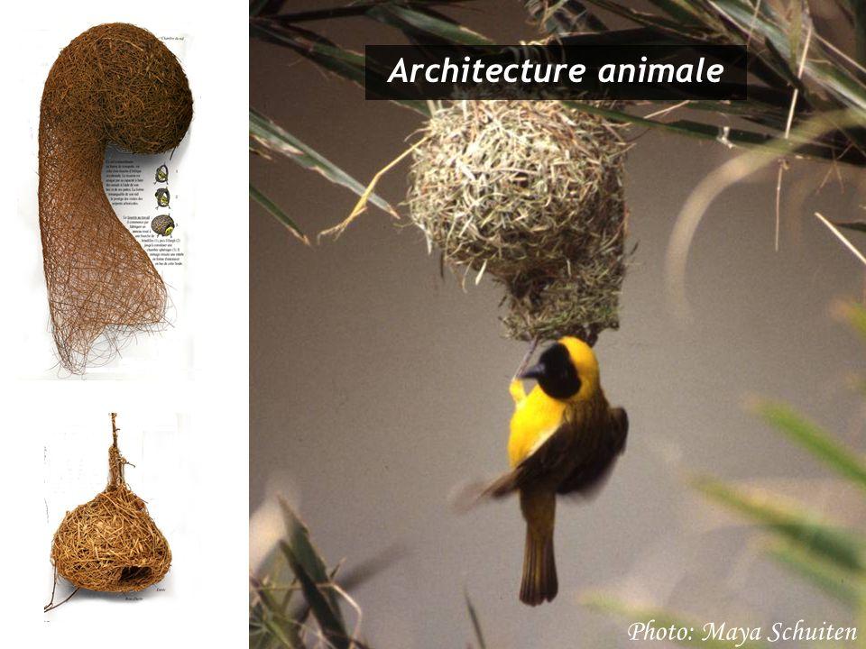Architecture animale Photo: Maya Schuiten