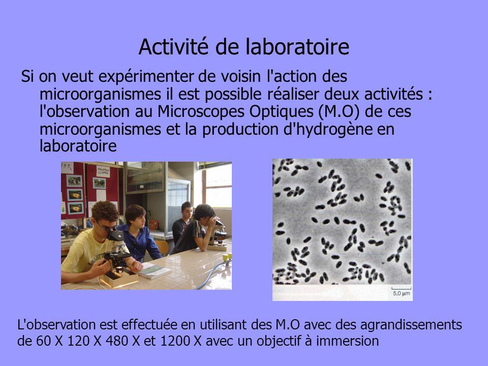 Activité de laboratoire
