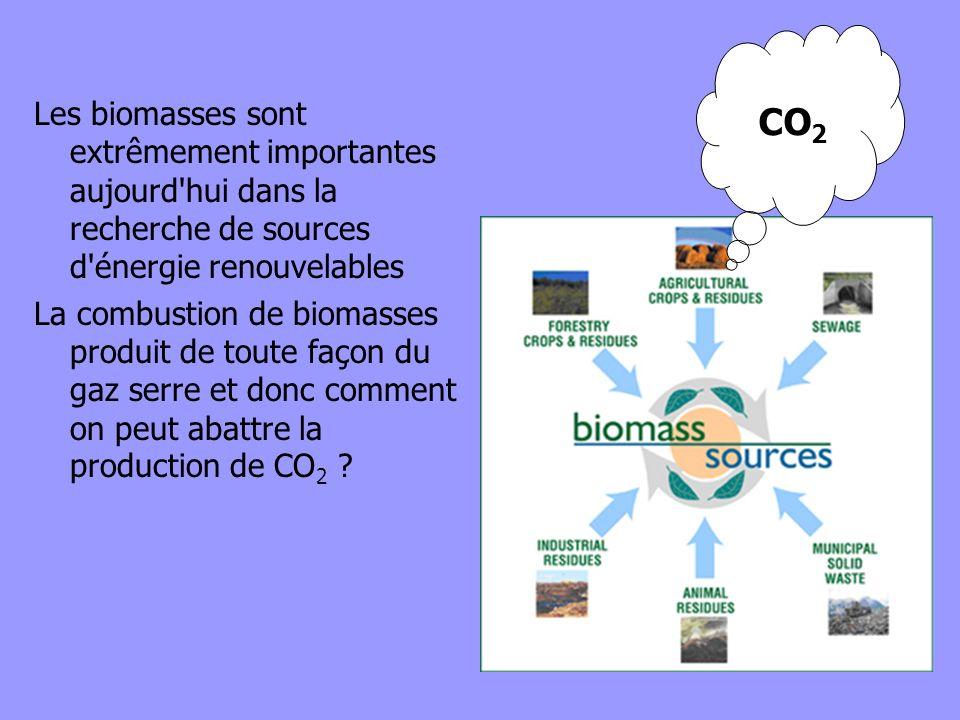 CO2 Les biomasses sont extrêmement importantes aujourd hui dans la recherche de sources d énergie renouvelables.
