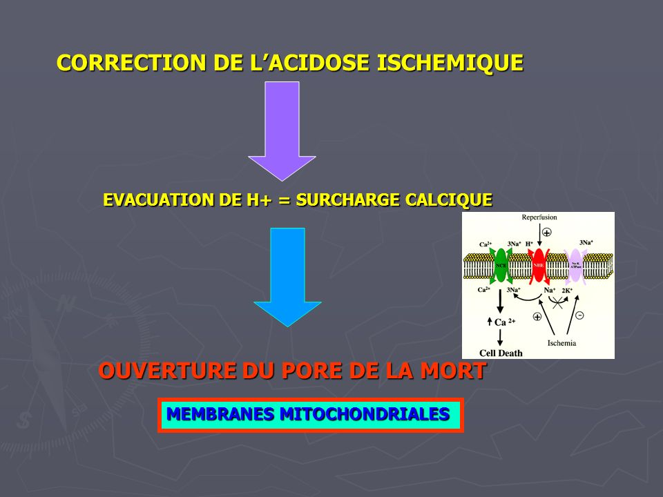 CORRECTION DE L'ACIDOSE ISCHEMIQUE