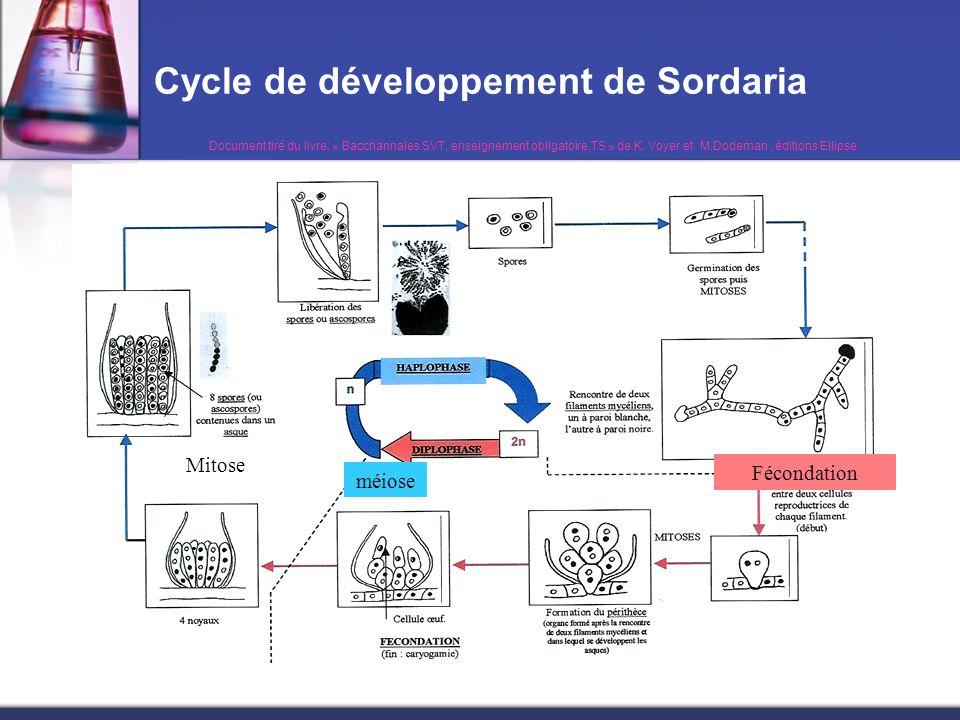 Cycle de développement de Sordaria