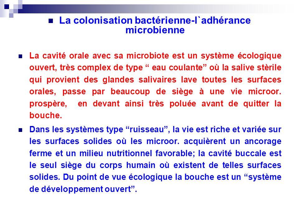 La colonisation bactérienne-l`adhérance microbienne