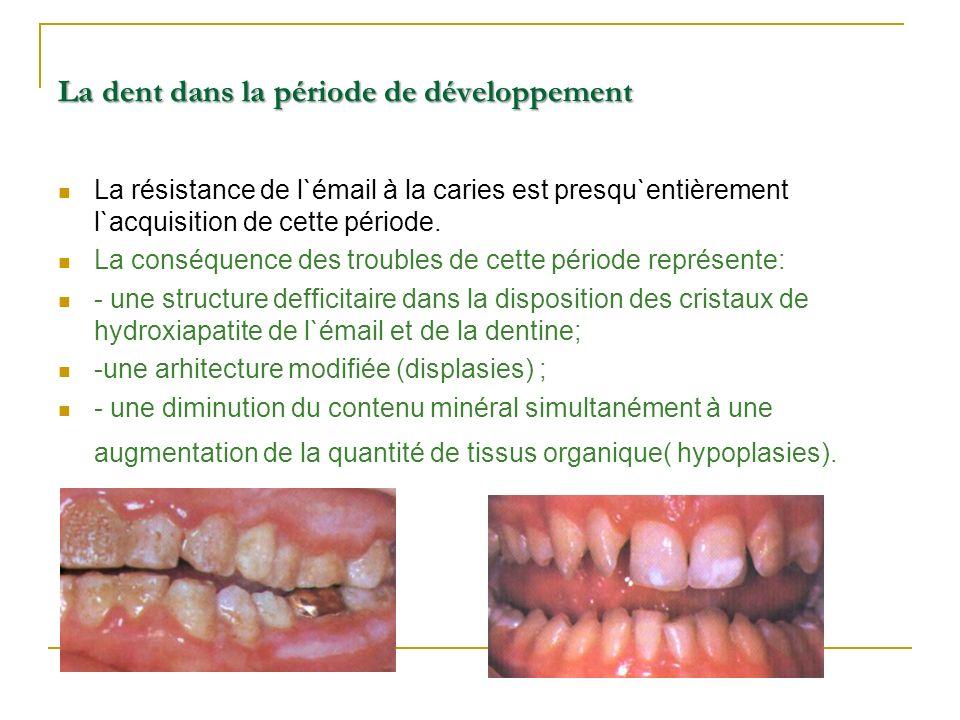 La dent dans la période de développement