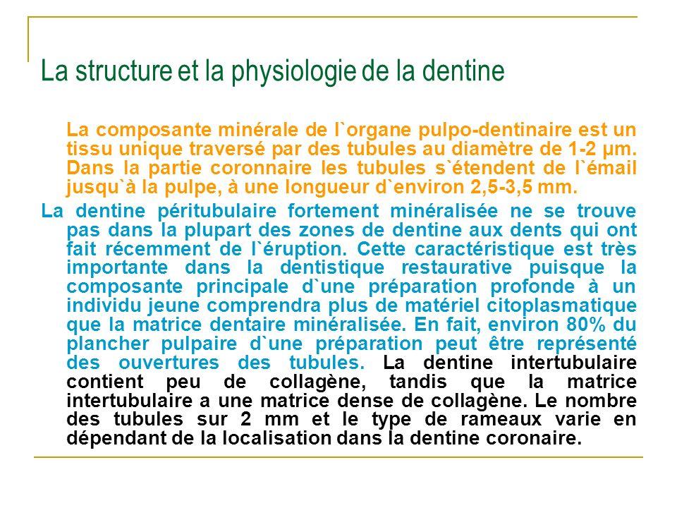 La structure et la physiologie de la dentine