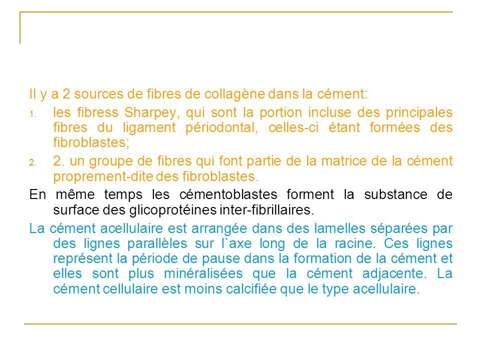 Il y a 2 sources de fibres de collagène dans la cément:
