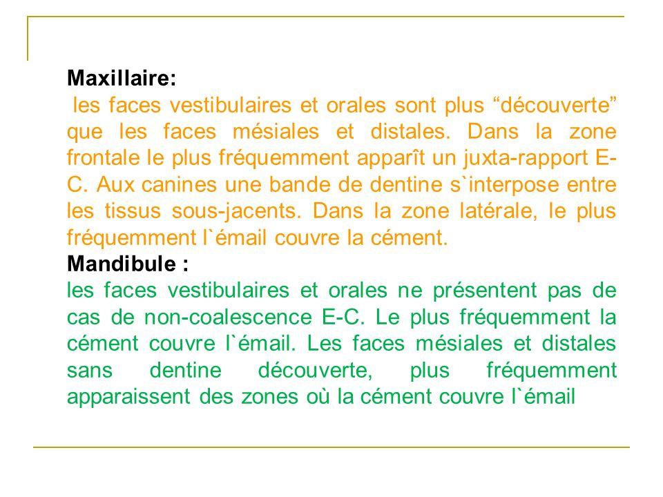 Maxillaire: