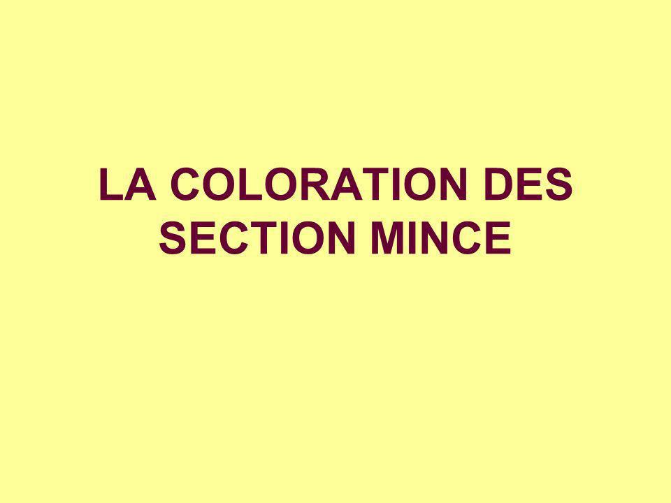 LA COLORATION DES SECTION MINCE