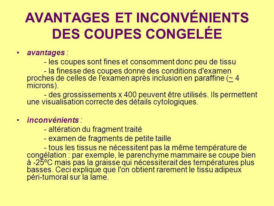AVANTAGES ET INCONVÉNIENTS DES COUPES CONGELÉE