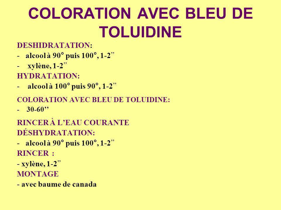 COLORATION AVEC BLEU DE TOLUIDINE
