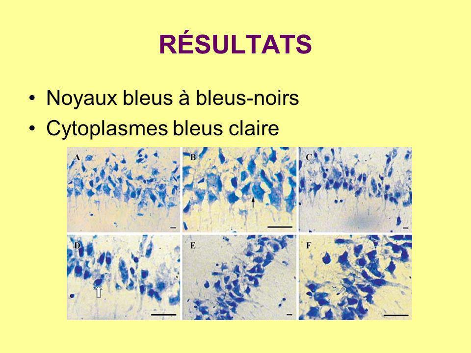 RÉSULTATS Noyaux bleus à bleus-noirs Cytoplasmes bleus claire