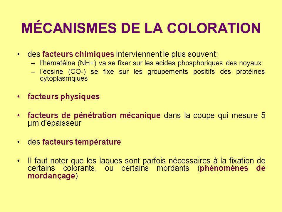 MÉCANISMES DE LA COLORATION
