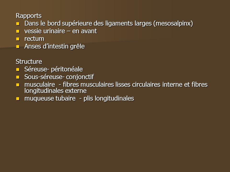 Rapports Dans le bord supérieure des ligaments larges (mesosalpinx) vessie urinaire – en avant. rectum.