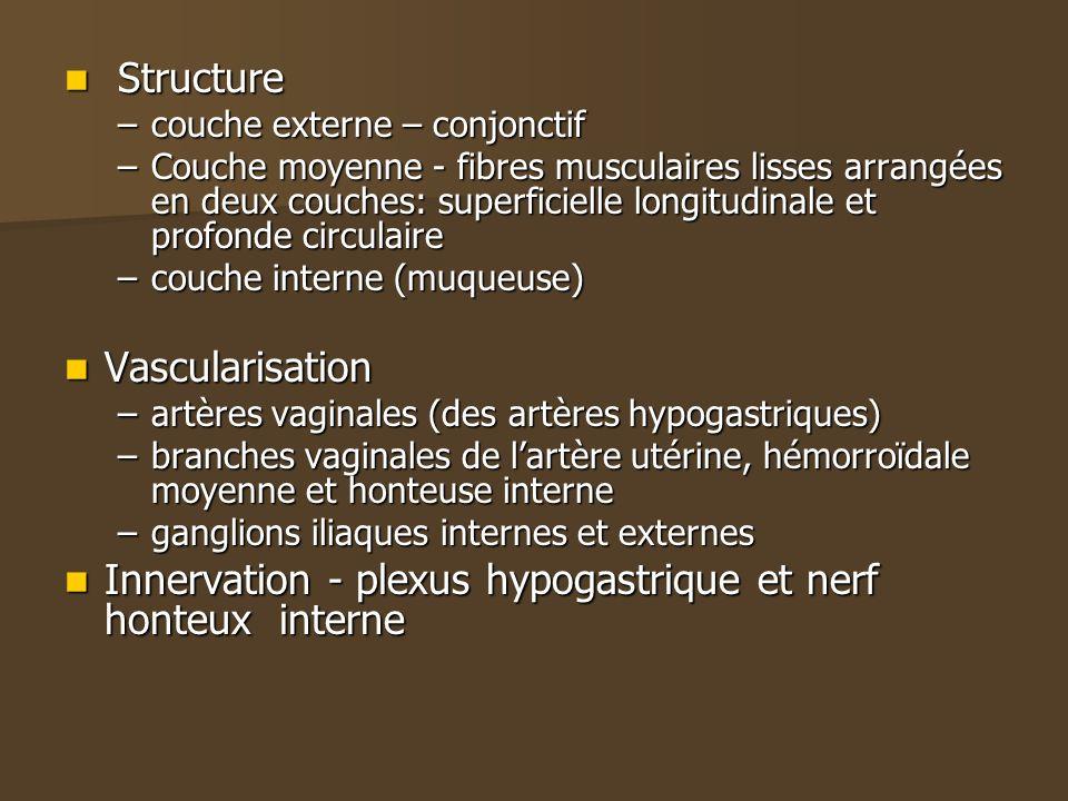 Innervation - plexus hypogastrique et nerf honteux interne