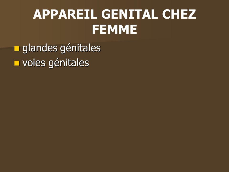 APPAREIL GENITAL CHEZ FEMME