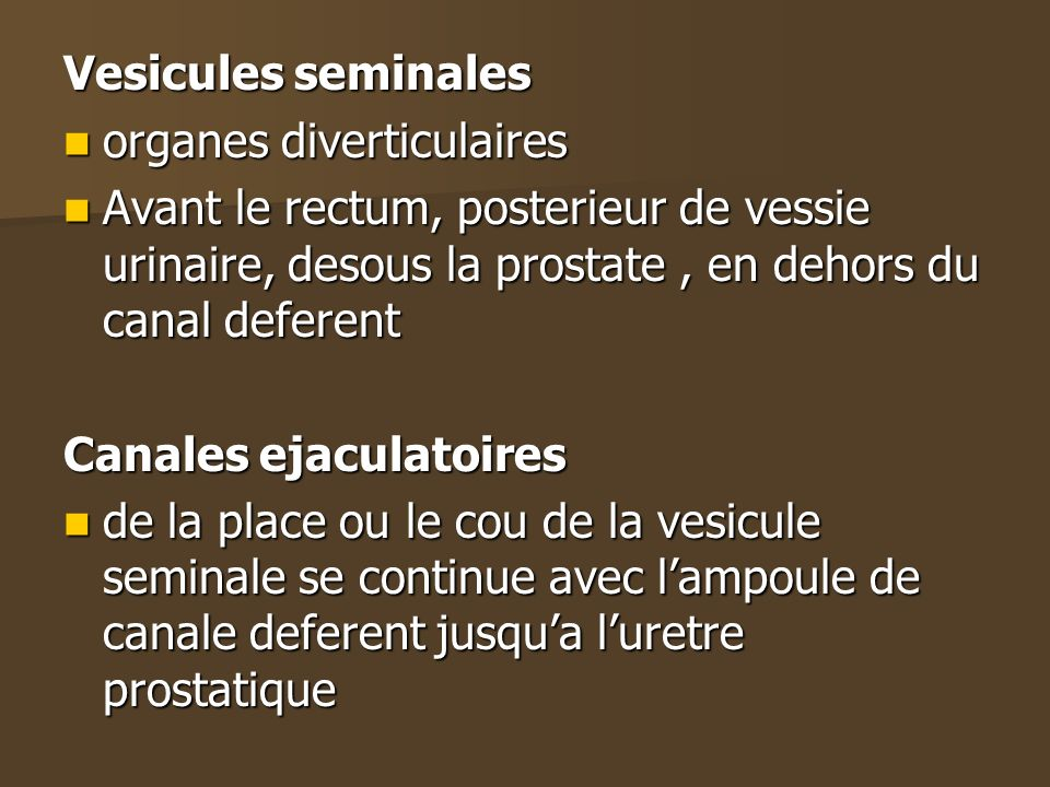 Vesicules seminalesorganes diverticulaires. Avant le rectum, posterieur de vessie urinaire, desous la prostate , en dehors du canal deferent.