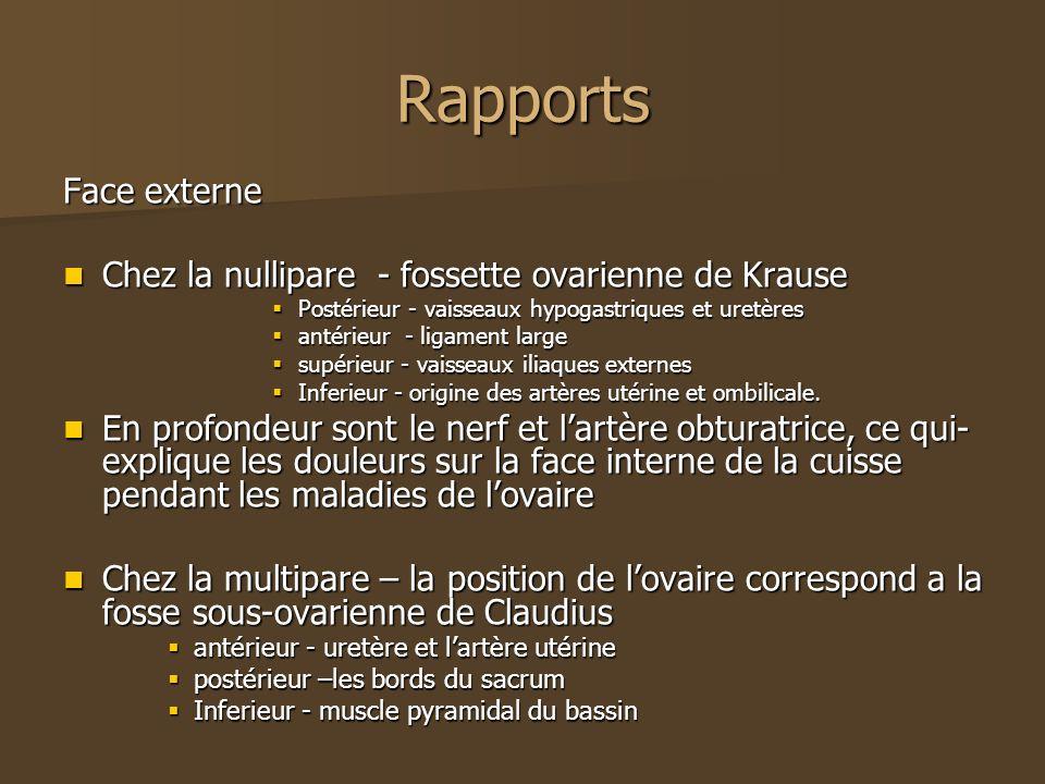 Rapports Face externe Chez la nullipare - fossette ovarienne de Krause