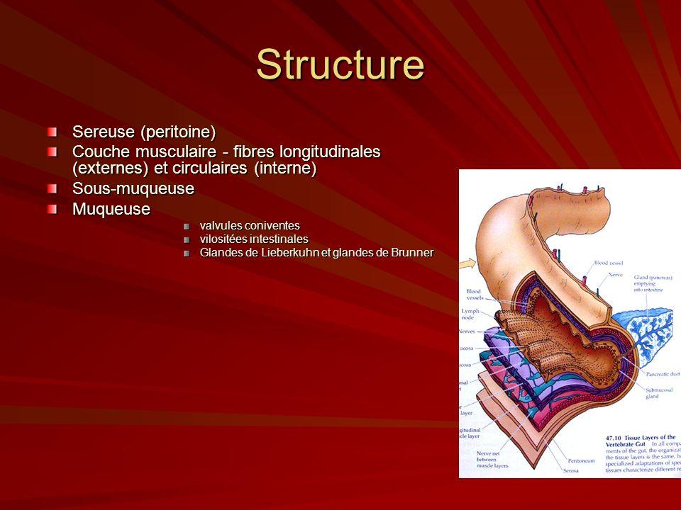 Structure Sereuse (peritoine)