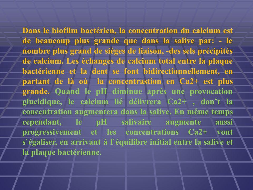 Dans le biofilm bactérien, la concentration du calcium est de beaucoup plus grande que dans la salive par: - le nombre plus grand de sièges de liaison, -des sels précipités de calcium.
