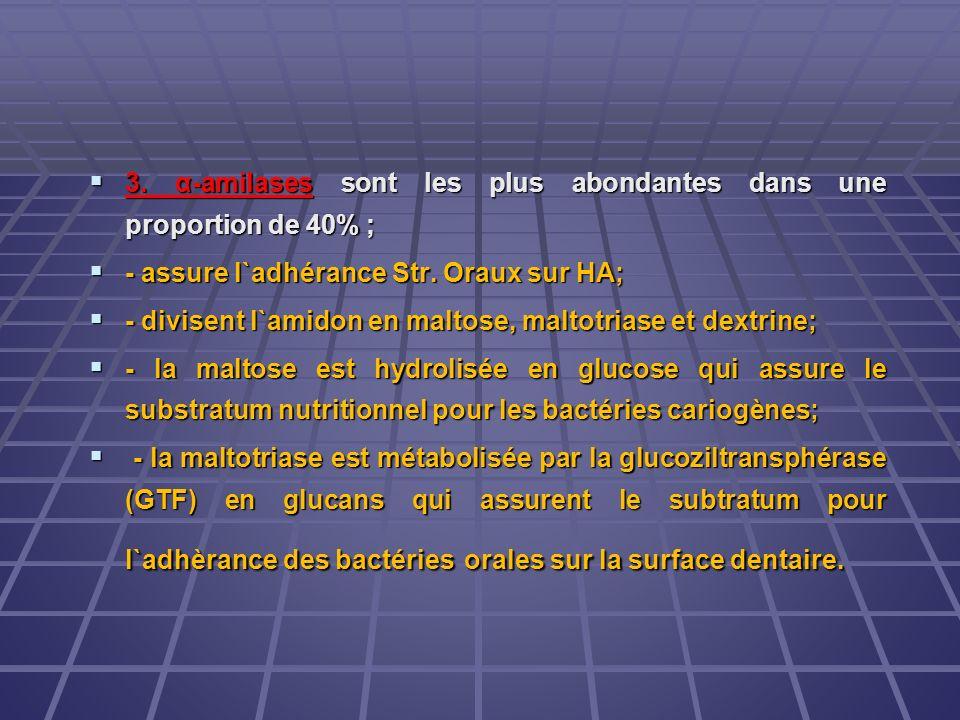 3. α-amilases sont les plus abondantes dans une proportion de 40% ;