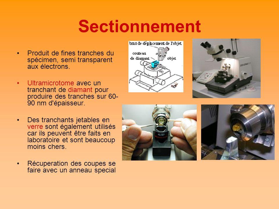 Sectionnement Produit de fines tranches du spécimen, semi transparent aux électrons.