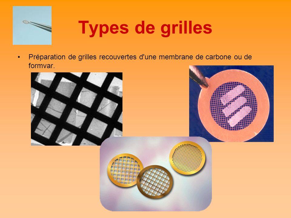 Types de grilles Préparation de grilles recouvertes d une membrane de carbone ou de formvar.