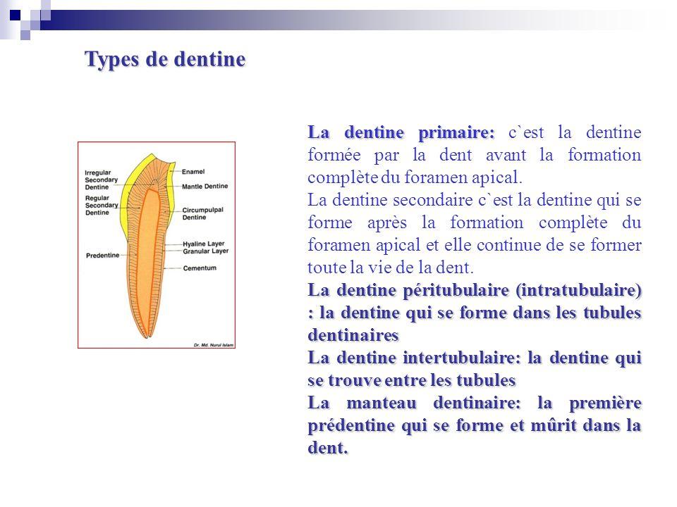 Types de dentine La dentine primaire: c`est la dentine formée par la dent avant la formation complète du foramen apical.