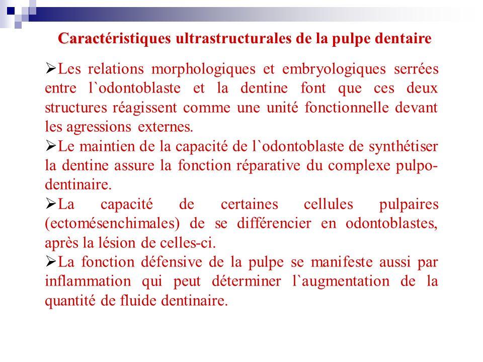 Caractéristiques ultrastructurales de la pulpe dentaire