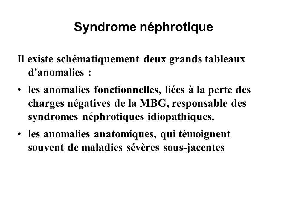 Syndrome néphrotique Il existe schématiquement deux grands tableaux d anomalies :