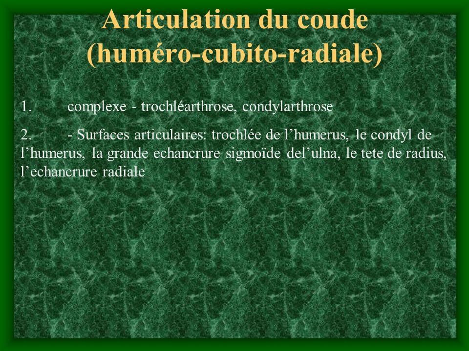 Articulation du coude (huméro-cubito-radiale)