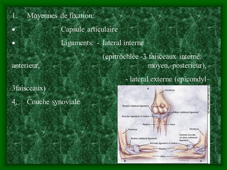 1. Moyennes de fixation:· Capsule articulaire. · Ligaments: - lateral interne.