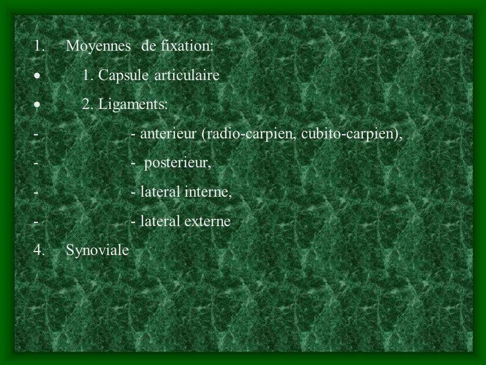 1. Moyennes de fixation:· 1. Capsule articulaire. · 2. Ligaments: - - anterieur (radio-carpien, cubito-carpien),