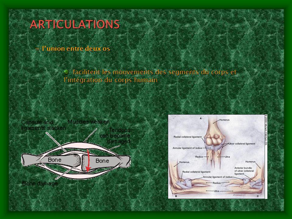 ARTICULATIONS = l'union entre deux os