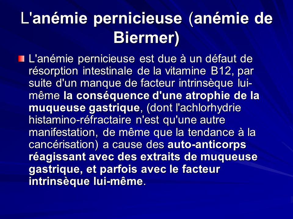 L anémie pernicieuse (anémie de Biermer)