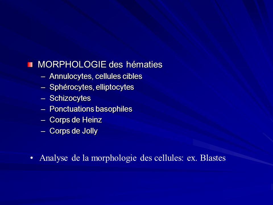 Analyse de la morphologie des cellules: ex. Blastes