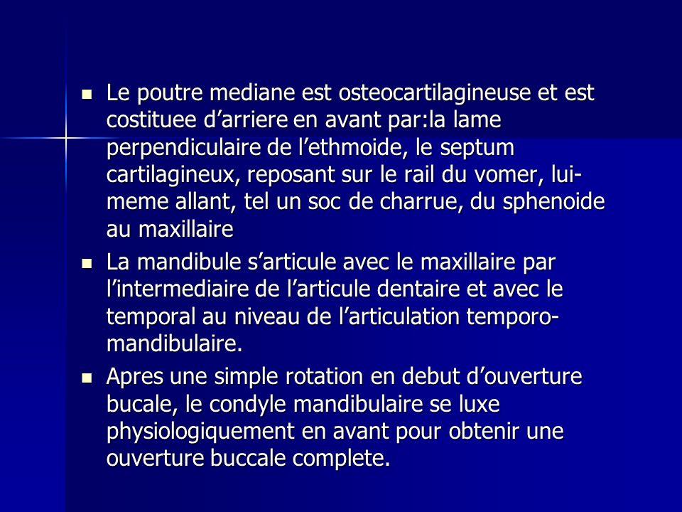 Le poutre mediane est osteocartilagineuse et est costituee d'arriere en avant par:la lame perpendiculaire de l'ethmoide, le septum cartilagineux, reposant sur le rail du vomer, lui-meme allant, tel un soc de charrue, du sphenoide au maxillaire