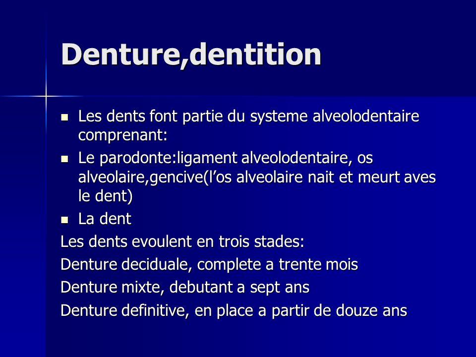 Denture,dentition Les dents font partie du systeme alveolodentaire comprenant:
