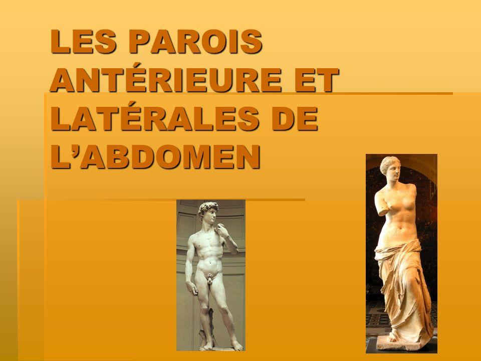 LES PAROIS ANTÉRIEURE ET LATÉRALES DE L'ABDOMEN