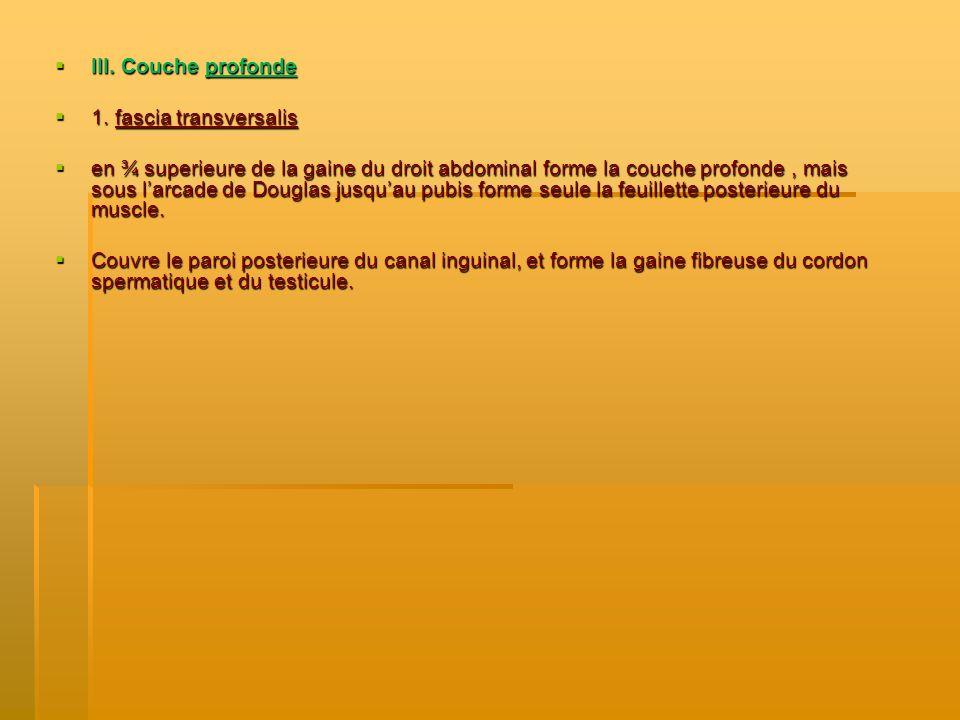 III. Couche profonde 1. fascia transversalis.